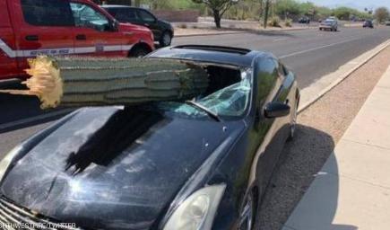 """شجرة """"صبار"""" اخترقت سيارته..وبعد نجاته بأعجوبة ..اعتقلته الشرطة"""