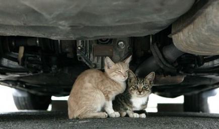 انتبهوا قبل أن تركبوا إلى السيارة