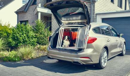 سيارة فورد فوكس حلت مشكلة تنقل الكلاب بوضع قفص في الصندوق الخلفي