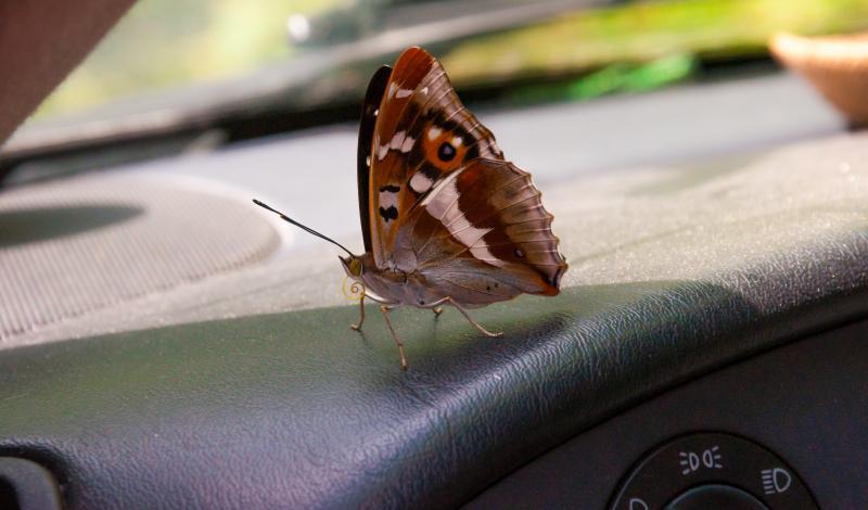 بالرغم من صغر حجمها إلا أن الحشرات تعتبر من الكائنات المخيفة خاصة للسيدات